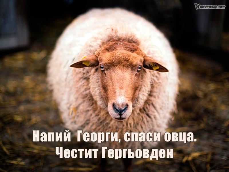 Напий  Георги, спаси овца. Честит Гергьовден